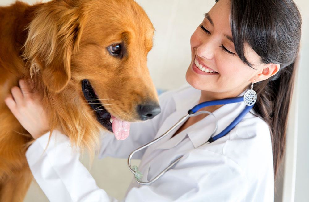 Veterinarian with pet