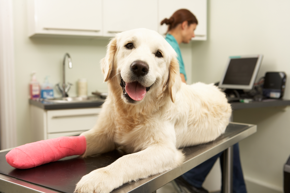 emergency pet care in toronto